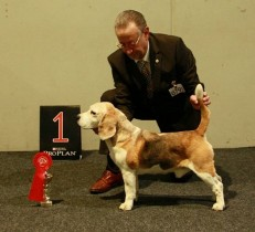 Int.Ch. Sir Simon of Dynamite s Gentry  1. Platz